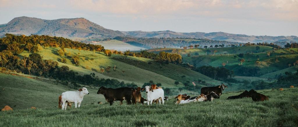 Vista de prado verde con montañas al fondo con vacas blancas y negras pastando